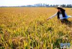 近300名涉农专家为辽宁省现代农业发展建言