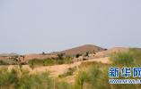 联合国防治荒漠化公约:土地退化带来23万亿美元损失