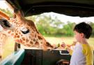 萌娃路遇贪吃长颈鹿