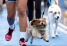 西安出台养犬最严整治:不听劝5年禁养