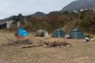 野生梅花鹿害怕了 杭州临安清凉峰自然保护区成旅游区