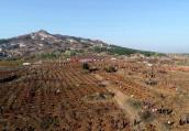 南陽臥龍實施國土綠化提速行動