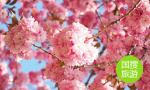 汶上文化旅游节开幕 赏花、看演出,好戏连台到五一
