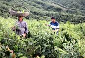 河南方城:养殖柞蚕带动群众增收致富