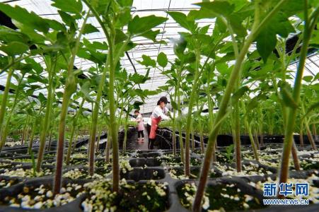 河北滦州:专业育苗富农家