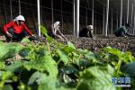 河北7大类优势特色产业引领现代农业发展