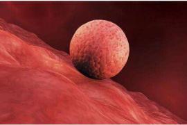 """中国科学家打开人类胚胎着床""""黑匣子""""绘制解锁导航图"""