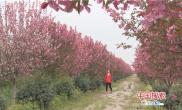 河南叶县:海棠花开扶贫园