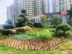 河南漯河:街头花坛、花境美出新高度