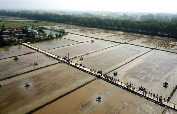 【新万博代理如何申请成功z】河南省水稻机械化种植推广演示现场会在罗山召开