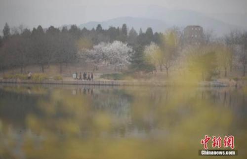 3月22日,北京遭遇雾霾天,空气质量达中度污染。图为市民在北京植物园赏春花。 <a target='_blank' href='http://www.chinanews.com/'>中新社记者 刘关关 摄