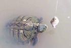 池塘钓龟傻眼一幕