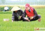 新沂市邵店镇党员志愿者帮助村民水稻育秧