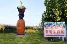 5月28日,泰安角峪镇岳家庄第二届葡萄采摘节开幕啦!
