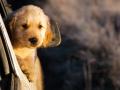 狗狗腹泻不吃饭是生病征兆 如何做一个合格的主人