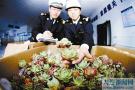 大连海关查获多肉植物6大袋 2600余株