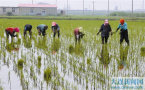 应对干旱:大连推广多项技术 有效提高农业抗旱能力