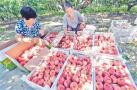 永清县后奕镇:一村一品 鲜桃种植富农家