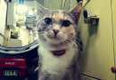 核潜艇上的战斗猫