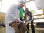 援外农业专家:帮非洲提高产量 曾遇蟒蛇缠腿