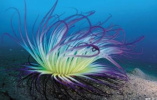 """""""雪球地球""""时代海洋藻类繁荣促使动物诞生"""