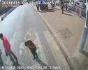 青岛公交司机斑马线前停车礼让 小男孩鞠躬致谢
