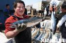 青岛8万斤鲅鱼上岸三地争抢 价格创7年新低