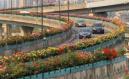 杭州全城盛放月季花