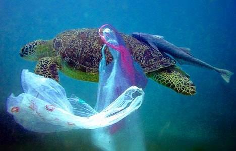 幸运飞艇全部开奖记录:塑料垃圾已经潜入海底一万米,吃海鲜等于吃塑料?