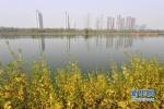 山东要求:各市严格执行涉及生态保护红线建设项目审查程序