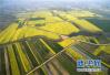 山东定向培养300名公费农科生 每年4000元补助