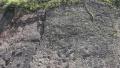 茅台镇现侏罗纪早期大型恐龙足迹群 多达250个