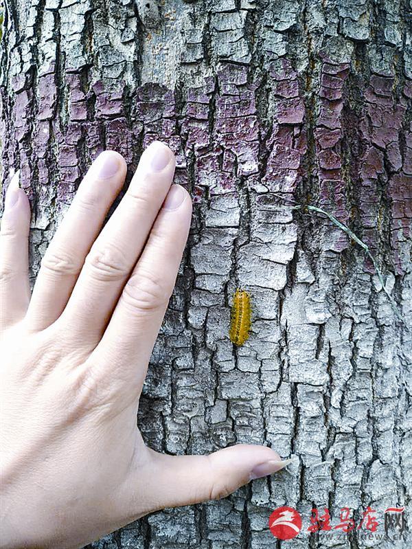 男青年树下看手机 脖子突然被丽绿刺蛾蛰伤