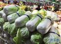 秋季蔬菜已上市 洛阳蔬菜价格开始出现回落