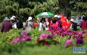 第37届中国洛阳牡丹