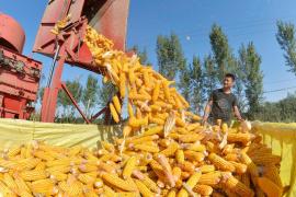 上半年农民收入增6.6%