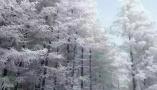 美醉了!说好的雪,终于来了!