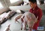 农业农村部:去年11月以来全国生猪存栏首次回升