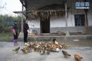沧州:一季度农林牧渔业现价总产值达90亿元