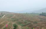 泌阳春季造林绿化工作连续三年被评为全市第一