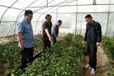 河南杞县:以有力监督助推农业产业发展